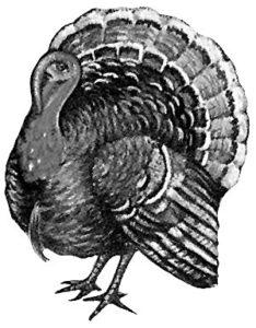 Dire Turkey